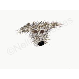 Hairy grey lurcher head shot