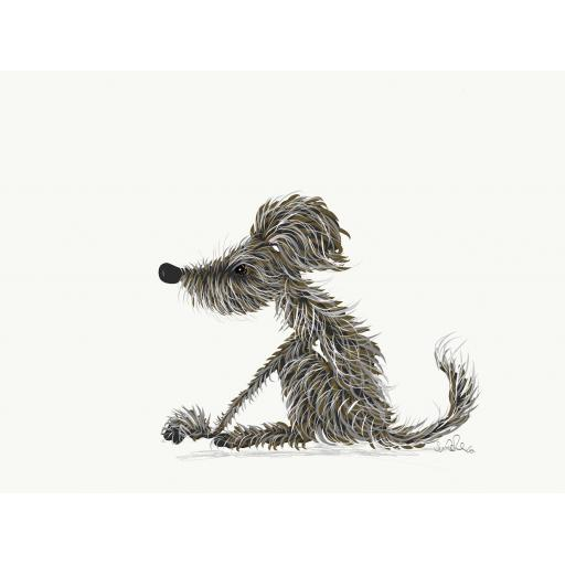 Hairy grey brown lurcher sitting
